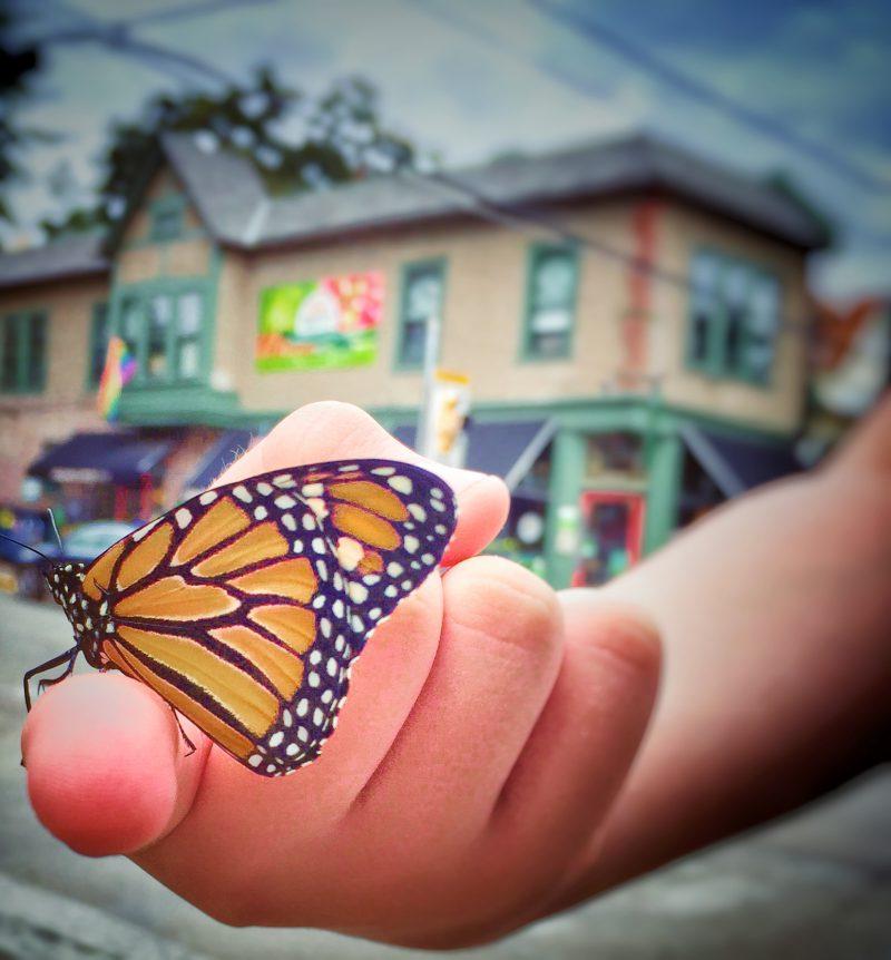 Butterfly birthday...flutterby