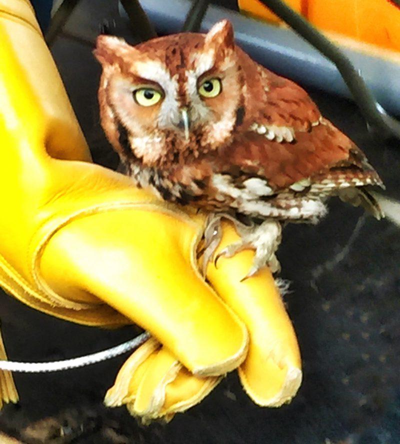 Is it Hedwig?